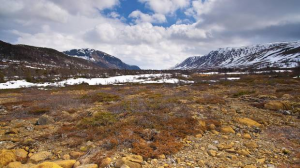 http://www.theglobeandmail.com/news/national/growth-of-arctic-shrubs-may-accelerate-global-warming-study-finds/article25333574/