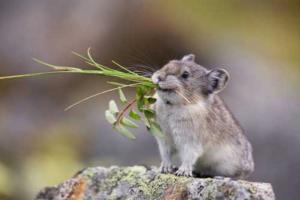 http://www.petsmagazine.com.sg/daily-bites/others/629-pika-cute